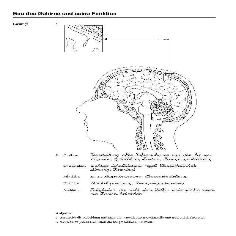 Informationsverarbeitung im Gehirn
